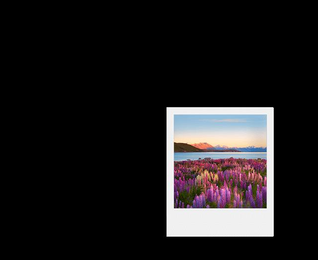 Paisagem com flores, rio e montanhas da Nova Zelândia