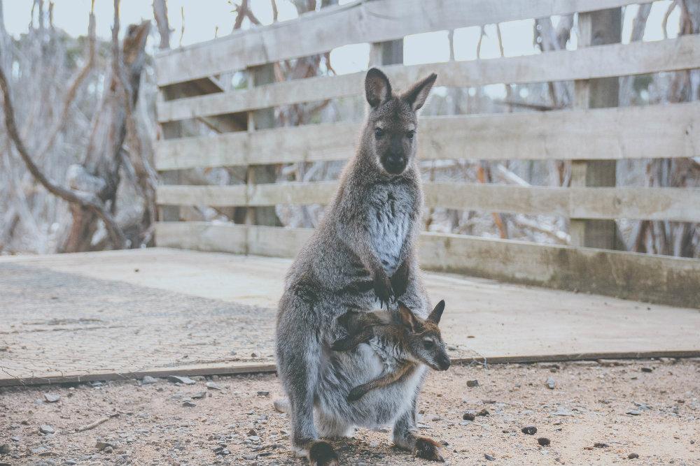 Passagem para a Austrália
